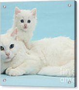 Mother Cat With Kitten Acrylic Print