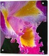 Orchid Rainbow Acrylic Print