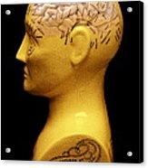Phrenology Bust Acrylic Print