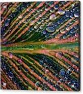 Raindrops On Lily Leaf Acrylic Print
