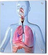 Respiratory System, Artwork Acrylic Print