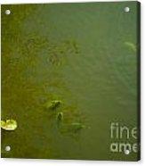 River Green Acrylic Print