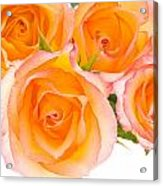 4 Roses Over White Acrylic Print