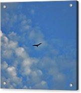 4- Seagull Acrylic Print
