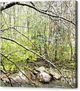 Spring Snow Along Williams River Acrylic Print