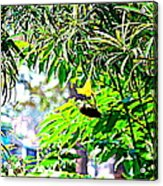 Story Of A Small Bird Acrylic Print