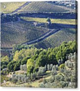 Vineyards And Olive Groves Acrylic Print