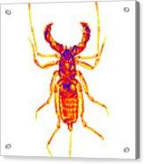 Whipscorpion X-ray Acrylic Print