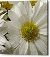 A Bouquet Of Chrysanthemums Acrylic Print