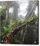 Bromeliad Bromeliaceae And Tree Fern Acrylic Print