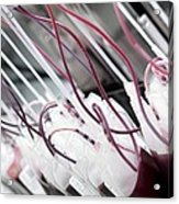 Donor Blood Processing Acrylic Print
