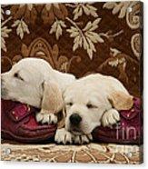 Goldidor Retriever Puppies Acrylic Print