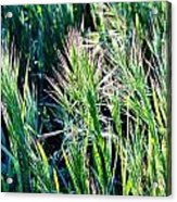 Grass In Bright Sunlight Acrylic Print