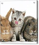 Kitten And Rabbits Acrylic Print