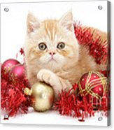 Kitten With Tinsel Acrylic Print