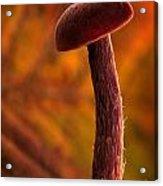 Mushroom Acrylic Print by Odon Czintos