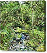 Native Bush Acrylic Print by MotHaiBaPhoto Prints