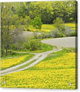 Spring Farm Landscape With Dandelion Bloom In Maine Acrylic Print