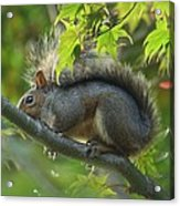 Squirrel Dinner Acrylic Print
