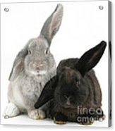 Two Rabbits Acrylic Print