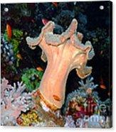 Underwater Landscape Acrylic Print
