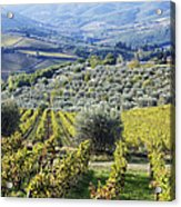 Vineyards And Olive Groves Acrylic Print by Jeremy Woodhouse