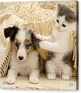 Kitten And Pup Acrylic Print