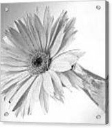 5495c3 Acrylic Print