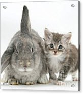 Kitten And Rabbit Acrylic Print