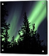Aurora Borealis Above The Trees Acrylic Print