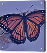 Butterfly Design Collection Acrylic Print