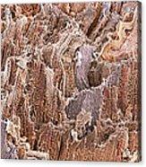 Cardiac Muscle, Sem Acrylic Print