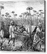 David Livingstone (1813-1873) Acrylic Print by Granger