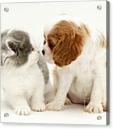 Dog And Cat Acrylic Print by Jane Burton
