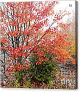 Fall Color Along The Highland Scenic Highway Acrylic Print