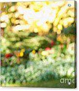Flower Garden In Sunshine Acrylic Print