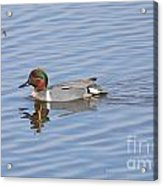 Green Wing Teal Acrylic Print