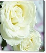 Roses For You Acrylic Print