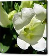 Snapdragon From The Mme Butterfly Mix Acrylic Print
