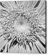 63341c Acrylic Print