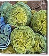 Calcareous Phytoplankton, Sem Acrylic Print