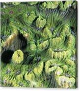 Hard Coral Acrylic Print