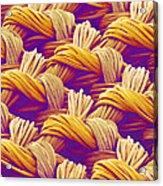 Woven Fabric, Sem Acrylic Print