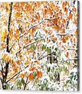 Autumn Snow Monongahela National Forest Acrylic Print