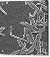 Legionella Pneumophila Acrylic Print