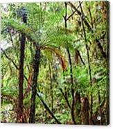 Native Bush Acrylic Print by MotHaiBaPhoto Prints