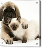 Puppy And Kitten Acrylic Print