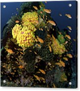 Reef Scene With Coral And Fish Acrylic Print