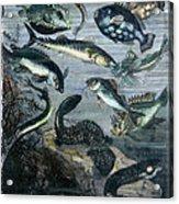 Verne: 20,000 Leagues Acrylic Print