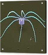 Diatom Alga, Sem Acrylic Print